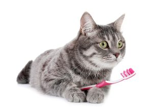 cat with tooth brush