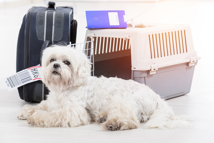 Tips for Traveling by Plane with a Dog.