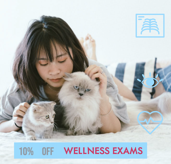 This September We Celebrate Pet Wellness