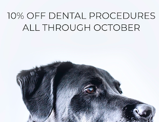 Offering 15% Off Dental Procedures