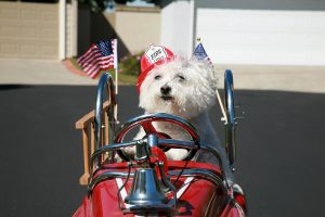 National Pet Fire Safety day tips