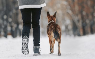 Benefits of Walking Your Dog