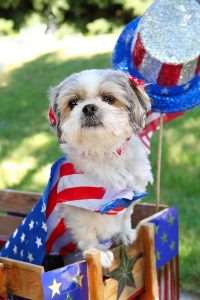 pet safety on 4th of july