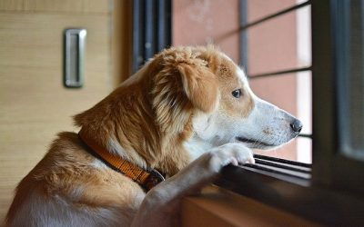 Preparing Your Pet for Your Return to Work