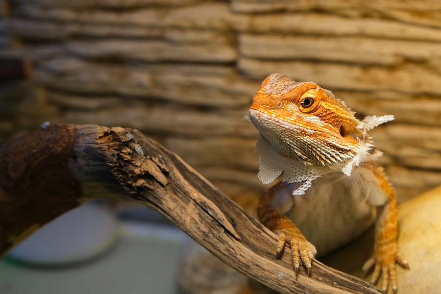 Signs of Illness in Exotic Pets